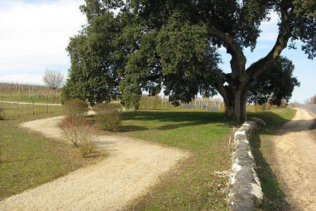 8e5aa87aecc69 Our Cognac tour in the Charente - Cycling holidays in France | Bike ...